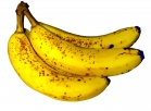 Banana_Fruit.JPG